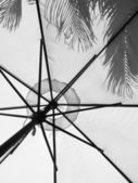 Sun umbrella with shadows of palm leaves — Stock Photo