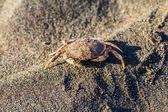 螃蟹在沙上 — 图库照片