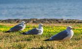 Many beautiful seagulls — Stock Photo