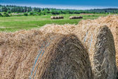 Yellow hay in a field — Stock Photo