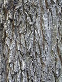 Bark texture. — Stock Photo