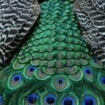 Peacock tail. — Stock Photo