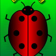 Stock Photo: Red ladybug.