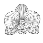 Exotic orchid drawing — Stock Vector