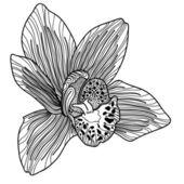 Disegno di orchidee esotica — Vettoriale Stock