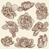 Peony drawings set — Vector de stock