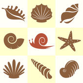 Shells and snail — Stock Vector