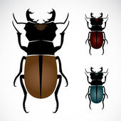 Stag beetle, the largest beetle — Stock Vector