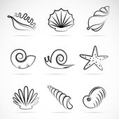Vector collection of sea shells and snail — Stock Vector