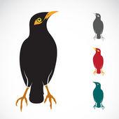 Vector image of an Myna bird — Stock Vector