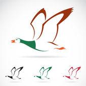 Vector image of an flying wild duck  — Stock vektor