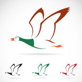 Vector image of an flying wild duck — Stock Vector