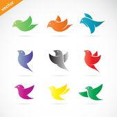 Renkli kuş vektör grubu — Stok Vektör