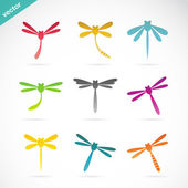 Vector group of colorful dragonfly  — Stock Vector