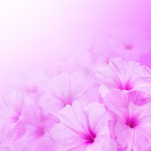 Flower background. Morning glory flowers — Stock Photo