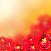 Flower background.  Red rose  — 图库照片