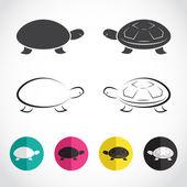 Vector group of turtle  — Vecteur
