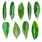 Group of green leaves  — Stock Photo