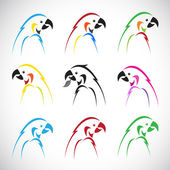 Vector images of group parrot  — Stock Vector