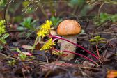 Nicee cogumelo na grama — Foto Stock