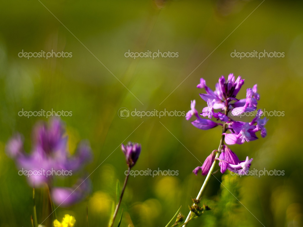 Flower-3 — Stock Photo #13705983