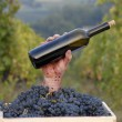 Stock Photo: One hand holding a red wine bottle on grapes cest on vineyard background.