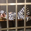 Stock Photo: Prisoner in a prison cell.