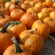 Pumpkins — Stock Photo #17060067