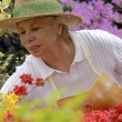 Mid adult woman gardening. — Stock Photo