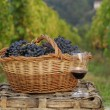 Bunch of grapes cest and red wine bottle on vineyard ambient. — Lizenzfreies Foto