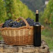 Stock Photo: Bunch of grapes cest and red wine bottle on vineyard ambient.
