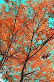 Red leaves of an aspen — Stock Photo