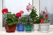 Window with flowerpots — Stock Photo
