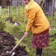 The woman digs the soil - Stockfoto