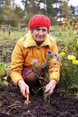The woman cultivates autumn flowers — Stock fotografie