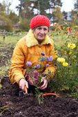 The woman cultivates autumn flowers — ストック写真