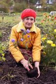 The woman cultivates autumn flowers — Stockfoto