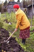 The woman digs the soil — Stok fotoğraf