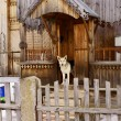 Stock Photo: Sentry dog