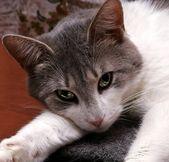 Sight of cat — Zdjęcie stockowe