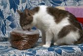 Cat eats dry cat food — ストック写真