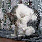 Cat washes — Stock Photo