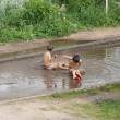 Children bathe in a puddle — Stock Photo
