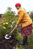 The woman digs the soil — Photo