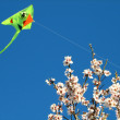 Almond blossoms and kite — Stock Photo #13577372