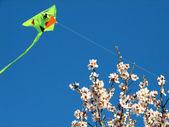 Amandel bloesems en kite — Stockfoto