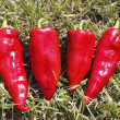 Four red peppers — Stock Photo
