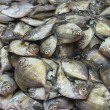 Stock Photo: Silvery pomfret