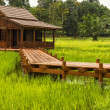 Wooden house at paddy field — Stock Photo #29260563