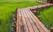 Pista di risaia — Foto Stock